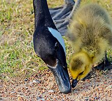 What is it MOM? by George I. Davidson