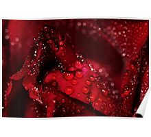 red rose and water drops Poster