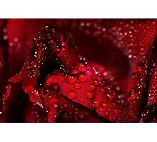 red rose and water drops Photographic Print
