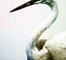 Quadrant Colour Bird Minimalist Modern Art Nature Photography by ARTificiaLondon