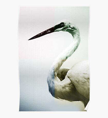 Quadrant Colour Bird Minimalist Modern Art Nature Photography Poster