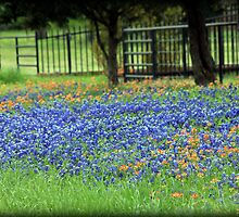 Bluebonnets And Paintbrushes by Betty Northcutt