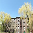 Spring Colors, Jersey City, New Jersey  by lenspiro