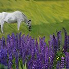 Appaloosa Freedom by Wayne King