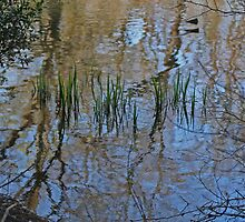 Central Park Reflection IMG_8109 by KarenDinan