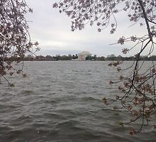 Jefferson Memorial Blossoming by Grace314