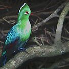 Knysna Lourie (Tauraco coryyhaix ) by Warren. A. Williams