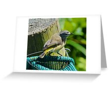 Yellow-rumped Thornbill Greeting Card