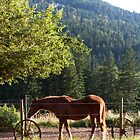 Horse of the Salt Spring Ranch by Madeline Snow