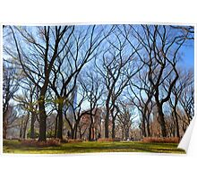 Trees - Central Park Poster