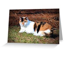 Calico Beauty Greeting Card