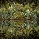 Flax - New Zealand by Kimball Chen
