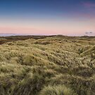 Tussock - New Zealand by Kimball Chen