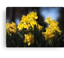 Sunny Spring Day Canvas Print