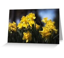 Sunny Spring Day Greeting Card