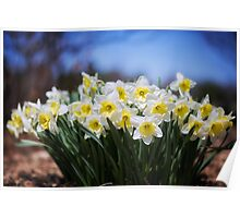Bunch of Spring Color Poster