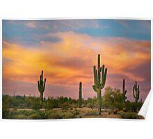 Saguaro Desert Life Poster
