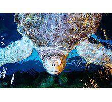 Sea Turtle smile Photographic Print