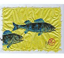 Gyotaku - Yellow Perch - Bluefish Photographic Print