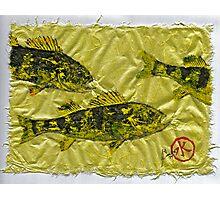 Gyotaku - Yellow Perch - Walleye Photographic Print