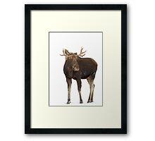 Moose in winter Framed Print