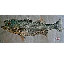 Gyotaku - Striped Bass - Rock Fish - Striper Photographic Print