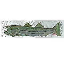 Gyotaku - Striped Bass - Rock Fish - Striper Photographic Print