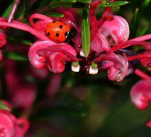 Flower Monster........ by lynn carter