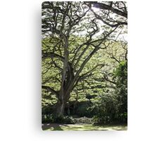 Tree of Serenity Canvas Print
