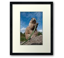 Prairie Dog Framed Print