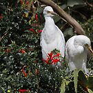 Cattle Egrets (Bubulcus Ibis) by Warren. A. Williams
