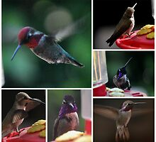 COLLAGE OF  HUMMINGBIRDS NUMBER 2 by JAYMILO