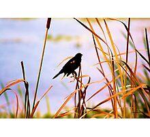 Wetland Florida Photographic Print