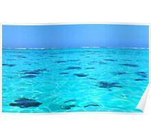 Moorea Coral Reef - Moorea Island Poster