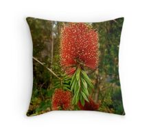 Botlebrush, Eucalyptus. Gold Coast Aust; Throw Pillow