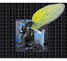 flys of Andamor suffer bird inflation Photographic Print