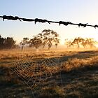 Web... by Colin Binks