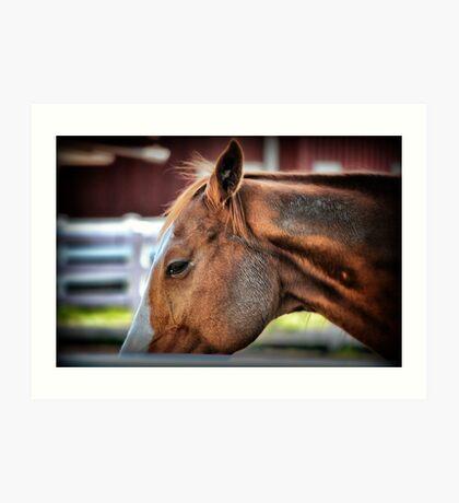Equine Art Print