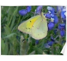 Butterflies Today Poster