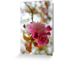 Mountain View Cherry Blossom Greeting Card