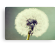Summer Wishes Canvas Print