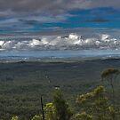 Rainforest Panorama - NSW - Australia by Bryan Freeman