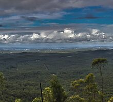 Rainforest Panorama - NSW - Australia by Bryan Freeman