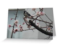 Great tit in sakura blossoms Greeting Card