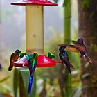 Four Species Of Hummingbirds In Mindo Ecudor by Al Bourassa