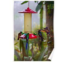 Four Species Of Hummingbirds In Mindo Ecudor Poster