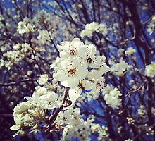 Spring InstaFlower by LaurelMuldowney