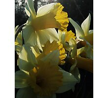 Hugged by the Sun Photographic Print