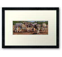 Zebras in the Dust Framed Print