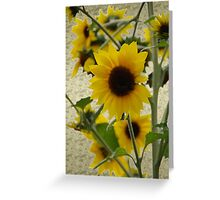 Wildflowers in Style Greeting Card